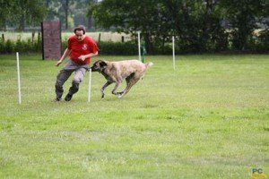 Hundebreitensport-Slalom