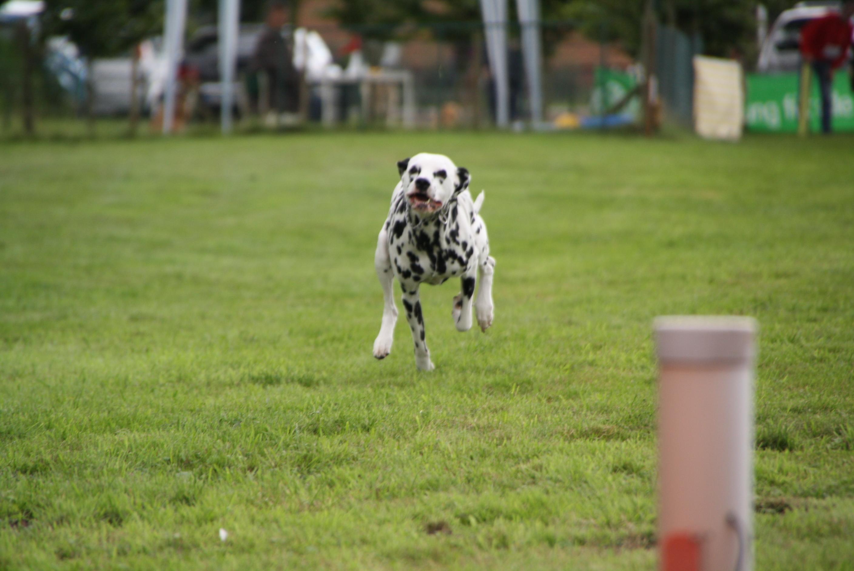 Hundesport Delmenhorst Hunderennen